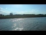 Белые цапли в дельте Астрахани